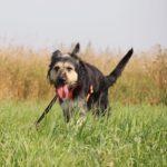 Адель собака из приюта на пристройство приют для бездомных животных Зов Предков zovpredkov.net фото 8