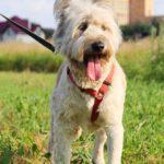 Кинг собака из приюта на пристройство приют для бездомных животных Зов Предков zovpredkov.net фото 2