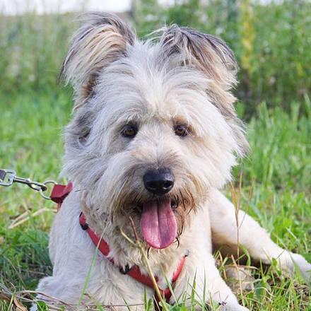 Кинг собака из приюта на пристройство приют для бездомных животных Зов Предков zovpredkov.net