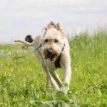 Кинг собака из приюта на пристройство приют для бездомных животных Зов Предков zovpredkov.net фото 19