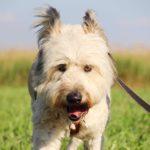 Кинг собака из приюта на пристройство приют для бездомных животных Зов Предков zovpredkov.net фото 4