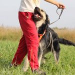 Адель собака из приюта на пристройство приют для бездомных животных Зов Предков zovpredkov.net фото 7