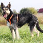 Адель собака из приюта на пристройство приют для бездомных животных Зов Предков zovpredkov.net фото 2