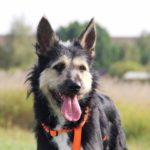 Адель собака из приюта на пристройство приют для бездомных животных Зов Предков zovpredkov.net фото 1