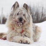 Кинг собака из приюта на пристройство приют для бездомных животных Зов Предков zovpredkov.net фото 15