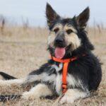 Адель собака из приюта на пристройство приют для бездомных животных Зов Предков zovpredkov.net фото 12