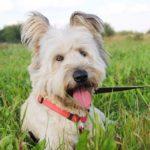Кинг собака из приюта на пристройство приют для бездомных животных Зов Предков zovpredkov.net фото 6