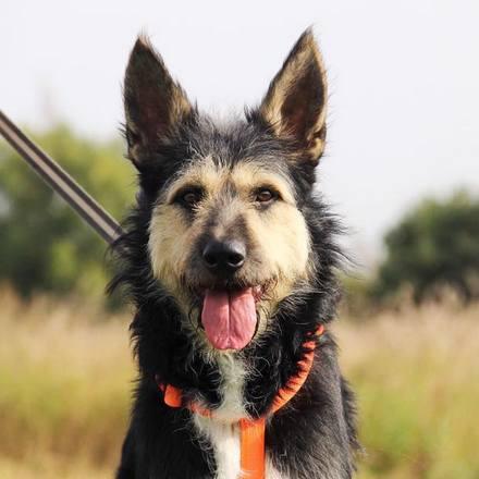 Адель собака из приюта на пристройство приют для бездомных животных Зов Предков zovpredkov.net