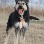 Адель собака из приюта на пристройство приют для бездомных животных Зов Предков zovpredkov.net фото 14
