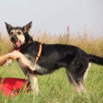Адель собака из приюта на пристройство приют для бездомных животных Зов Предков zovpredkov.net фото 5
