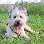 Кинг собака из приюта на пристройство приют для бездомных животных Зов Предков zovpredkov.net фото 8