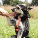 Адель собака из приюта на пристройство приют для бездомных животных Зов Предков zovpredkov.net фото 4