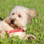 Кинг собака из приюта на пристройство приют для бездомных животных Зов Предков zovpredkov.net фото 1
