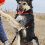 Адель собака из приюта на пристройство приют для бездомных животных Зов Предков zovpredkov.net фото 10