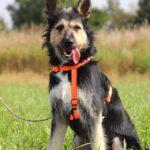 Адель собака из приюта на пристройство приют для бездомных животных Зов Предков zovpredkov.net фото 3