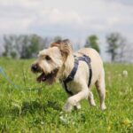 Кинг собака из приюта на пристройство приют для бездомных животных Зов Предков zovpredkov.net фото 17