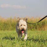 Кинг собака из приюта на пристройство приют для бездомных животных Зов Предков zovpredkov.net фото 7