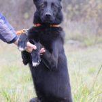 Черничка собака из приюта на пристройство, частный приют Зов Предков zovpredkov.net фото 6