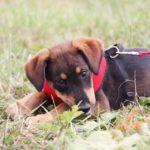 Мегги собака из приюта на пристройство, частный приют Зов Предков zovpredkov.net фото 4