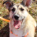 Долька собака из приюта на пристройство, частный приют Зов Предков zovpredkov.net фото 1