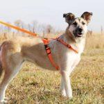 Долька собака из приюта на пристройство, частный приют Зов Предков zovpredkov.net фото 5