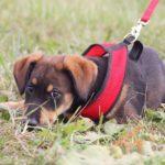 Мегги собака из приюта на пристройство, частный приют Зов Предков zovpredkov.net фото 5