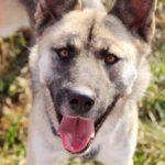 собака из приюта на пристройство, частный приют Зов Предков zovpredkov.net фото 1