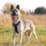 собака из приюта на пристройство, частный приют Зов Предков zovpredkov.net фото 6