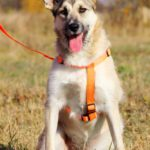 Долька собака из приюта на пристройство, частный приют Зов Предков zovpredkov.net фото 6