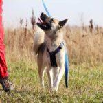 собака из приюта на пристройство, частный приют Зов Предков zovpredkov.net фото 7