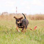 Мегги собака из приюта на пристройство, частный приют Зов Предков zovpredkov.net фото 7