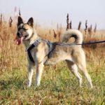 собака из приюта на пристройство, частный приют Зов Предков zovpredkov.net фото 5