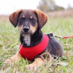 Мегги собака из приюта на пристройство, частный приют Зов Предков zovpredkov.net фото 3