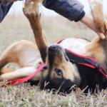 Бостон собака из приюта на пристройство приют для бездомных животных Зов Предков zovpredkov.net фото 1