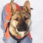 Айрис собака из приюта на пристройство приют для бездомных животных Зов Предков zovpredkov.net фото 20