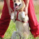 Каспер собака из приюта на пристройство, частный приют Зов Предков zovpredkov.net фото 1