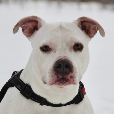 Джульетта собака из приюта на пристройство, собака ищет дом, частный приют для бездомных животных Зов Предков zovpredkov.net
