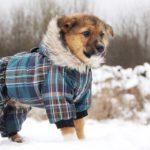 Филимон щенок из приюта на пристройство, частный приют Зов Предков zovpredkov.net фото 5