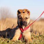 Айрис собака из приюта на пристройство приют для бездомных животных Зов Предков zovpredkov.net фото 4