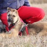 Айрис собака из приюта на пристройство приют для бездомных животных Зов Предков zovpredkov.net фото 10