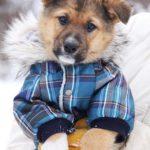 Филимон щенок из приюта на пристройство, частный приют Зов Предков zovpredkov.net фото 6
