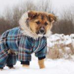 Филимон щенок из приюта на пристройство, частный приют Зов Предков zovpredkov.net фото 4