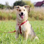Каспер собака из приюта на пристройство, частный приют Зов Предков zovpredkov.net фото 7