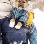 Филимон щенок из приюта на пристройство, частный приют Зов Предков zovpredkov.net фото 2