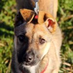 Айрис собака из приюта на пристройство приют для бездомных животных Зов Предков zovpredkov.net фото 7