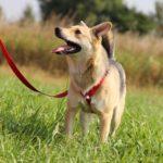 Каспер собака из приюта на пристройство, частный приют Зов Предков zovpredkov.net фото 3