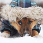 Филимон щенок из приюта на пристройство, частный приют Зов Предков zovpredkov.net фото 7