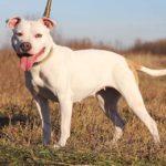Джульетта собака из приюта на пристройство, частный приют Зов Предков zovpredkov.net фото 4