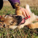 Айрис собака из приюта на пристройство приют для бездомных животных Зов Предков zovpredkov.net фото 3