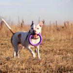 Джульетта собака из приюта на пристройство, частный приют Зов Предков zovpredkov.net фото 3